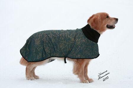 Manttelit ja takit | Dog It Life